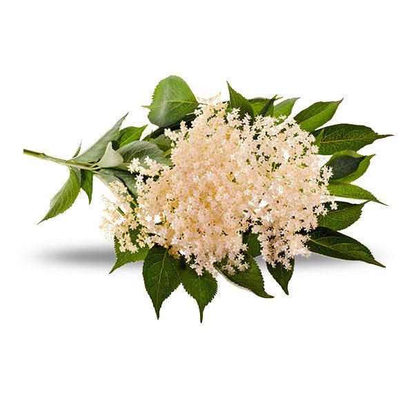 Elderflower-Mini-Cordial